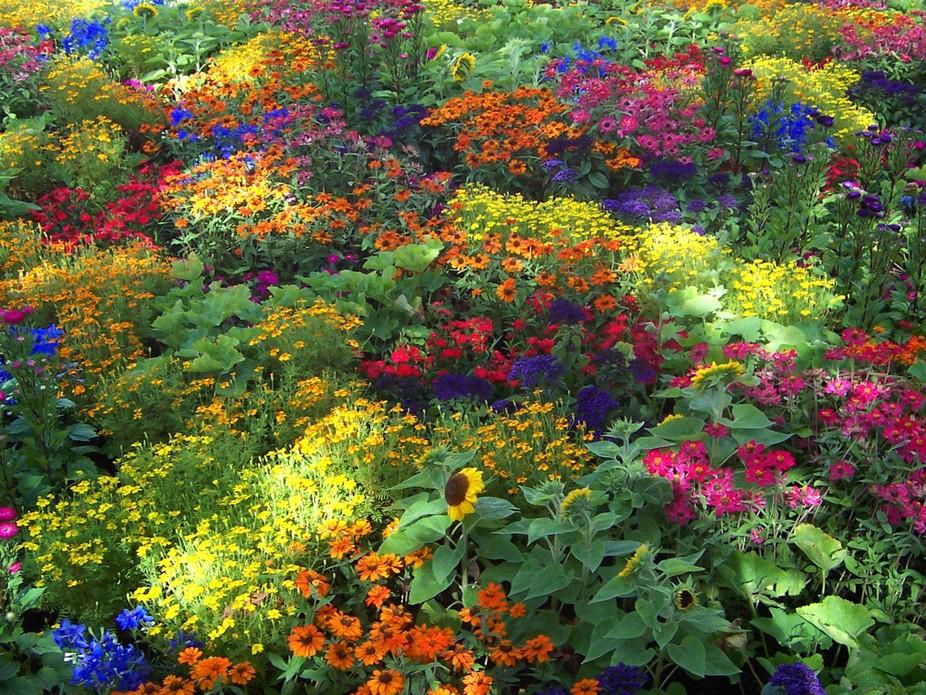 Indian flower garden