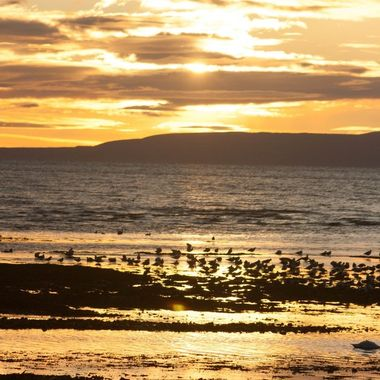 Taken at dusk where the River Doon meets the sea at Ayr. plenty of wading birds