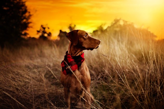 Ransom at Sunset by DanielleLyneePhotography - Image Of The Month Photo Contest Vol 27