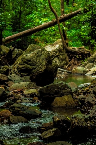 The Creek in the Deeply Tropic Rainforest