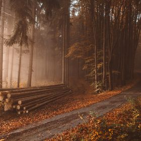 Lonely logs in the orange autumn foggy woods during the sunrise  © 2017 Tomas Hudolin, Feel free to follow me also on Instagram, search for toma...