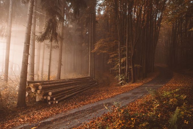 Lonely logs in the orange autumn woods by Hud1ai2 - Creative Reality Photo Contest