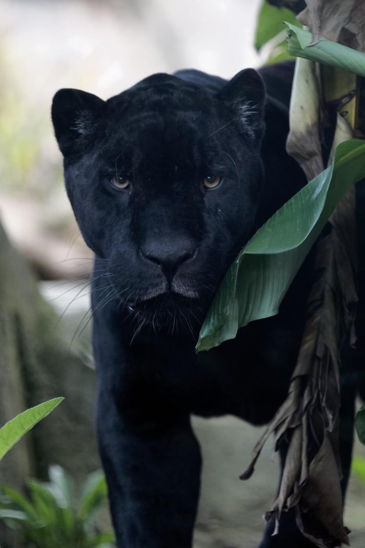 Picture taken in Paris, Zoo de Vincenne, France