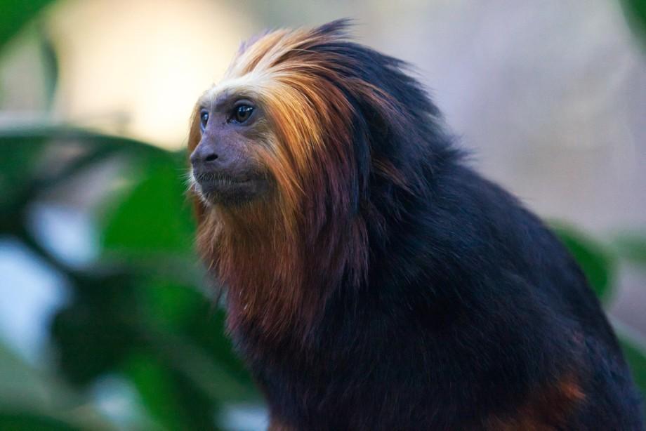 Picture taken in Paris, Zoo de Vincennes, France