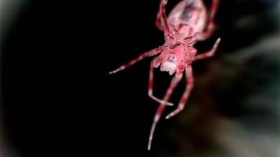 spider macro 2 manip
