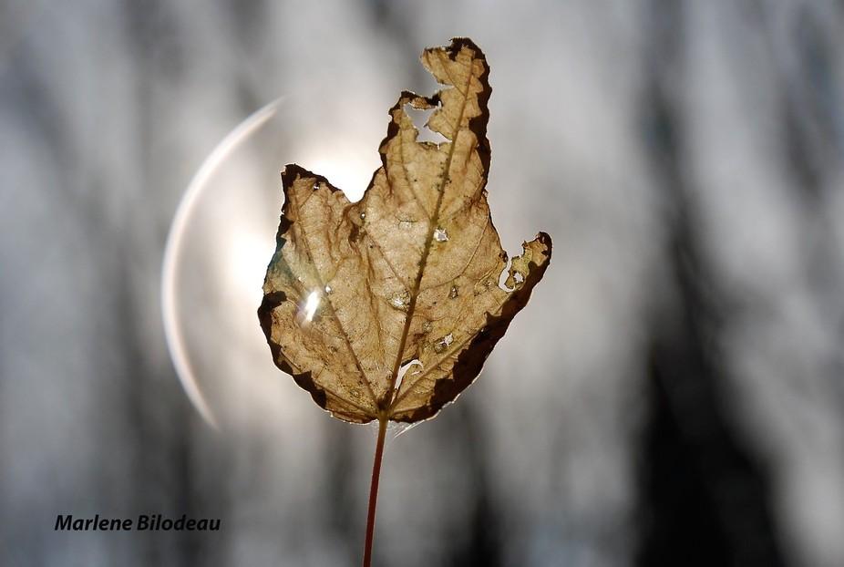 Sun trough leaf