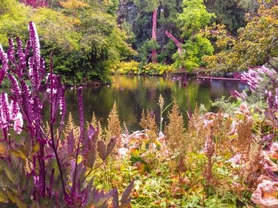The Pond in Autumn-3053