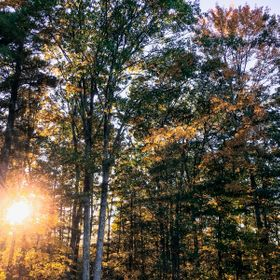 Taking a walk through the woods of central Massachusetts on October afternoon, I stopped in a clearing to find that the foliage had taken the col...