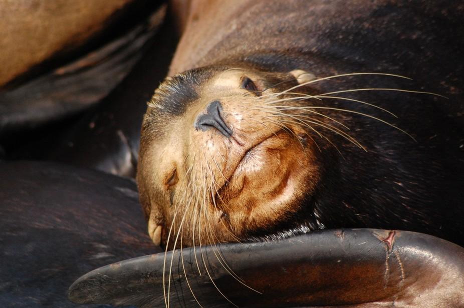 A sea lion lazily enjoying the sun