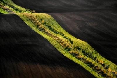 Moravian Fields II