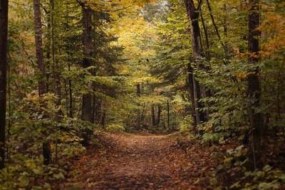 Newport Woods