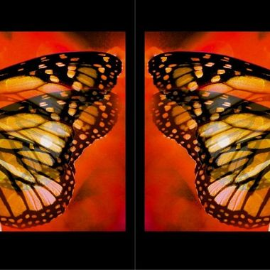 Manipulated Butterflies.