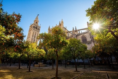 Orange Trees in Cathedral Courtyard
