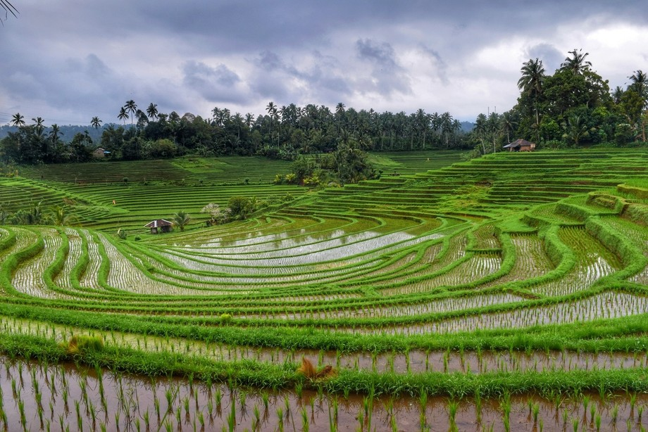 Layered Rice Terraces