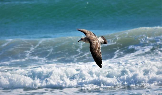 I can come up with some names, I see the waves and I see the Seagull flying above, and in my mind I see the Seagull surfing the waves just like a swimmer would do.
