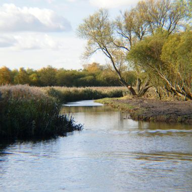 Norfolk Dyke off the river Ant.