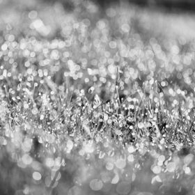 Abstract of grass and dew.