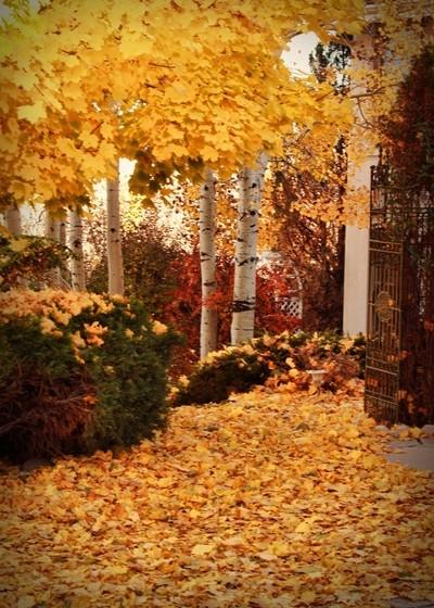 Front Yard Fall