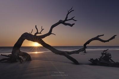 Sunrise - Driftwood Beach