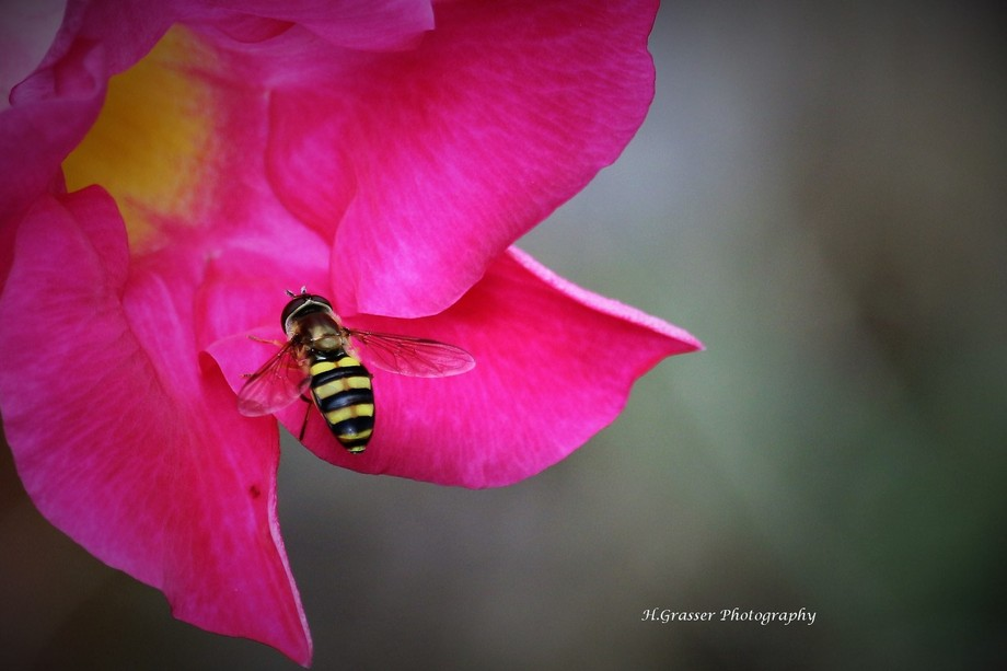 Got pretty close to this Honeybee that goodness he was interested in the flower