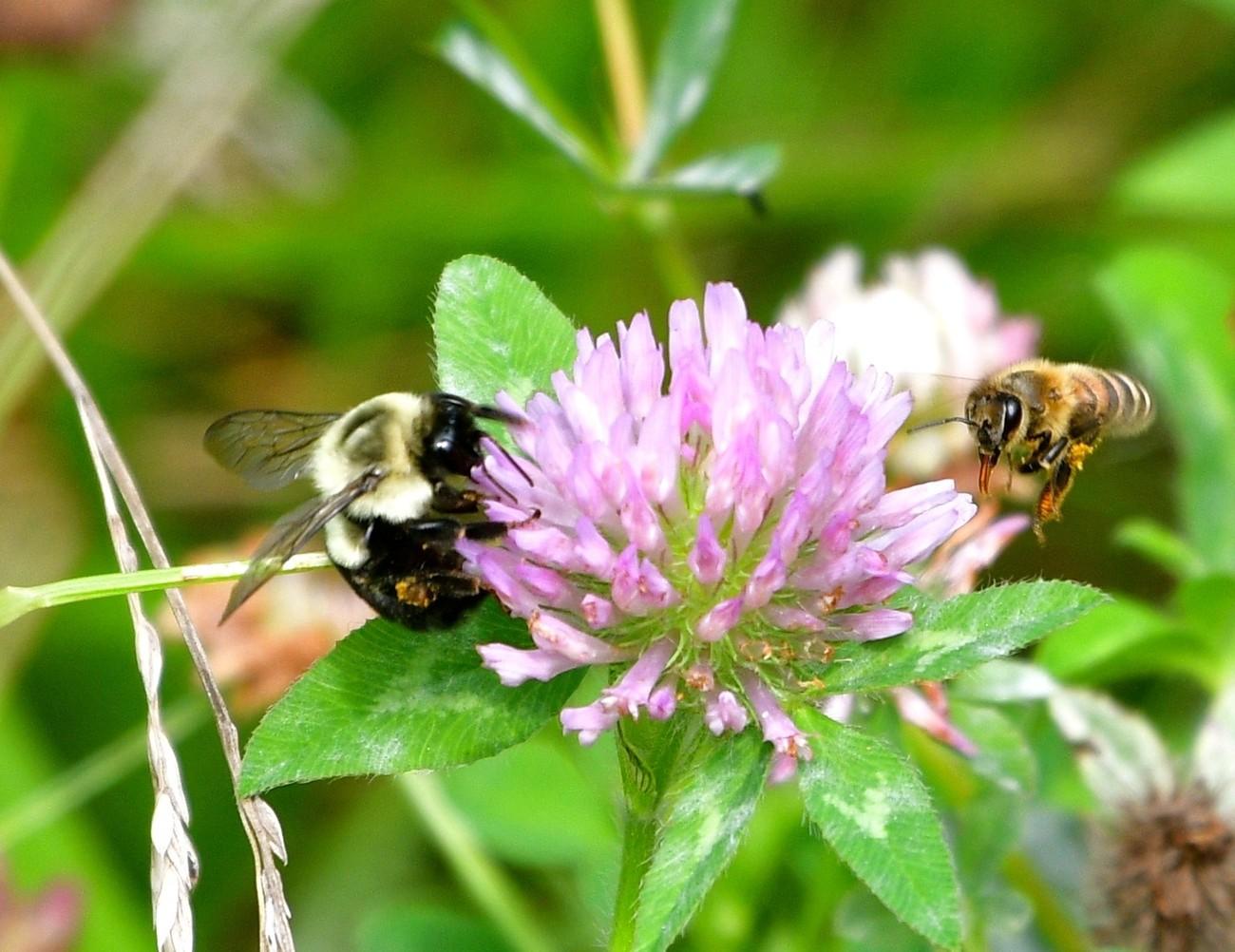Love these pollinators