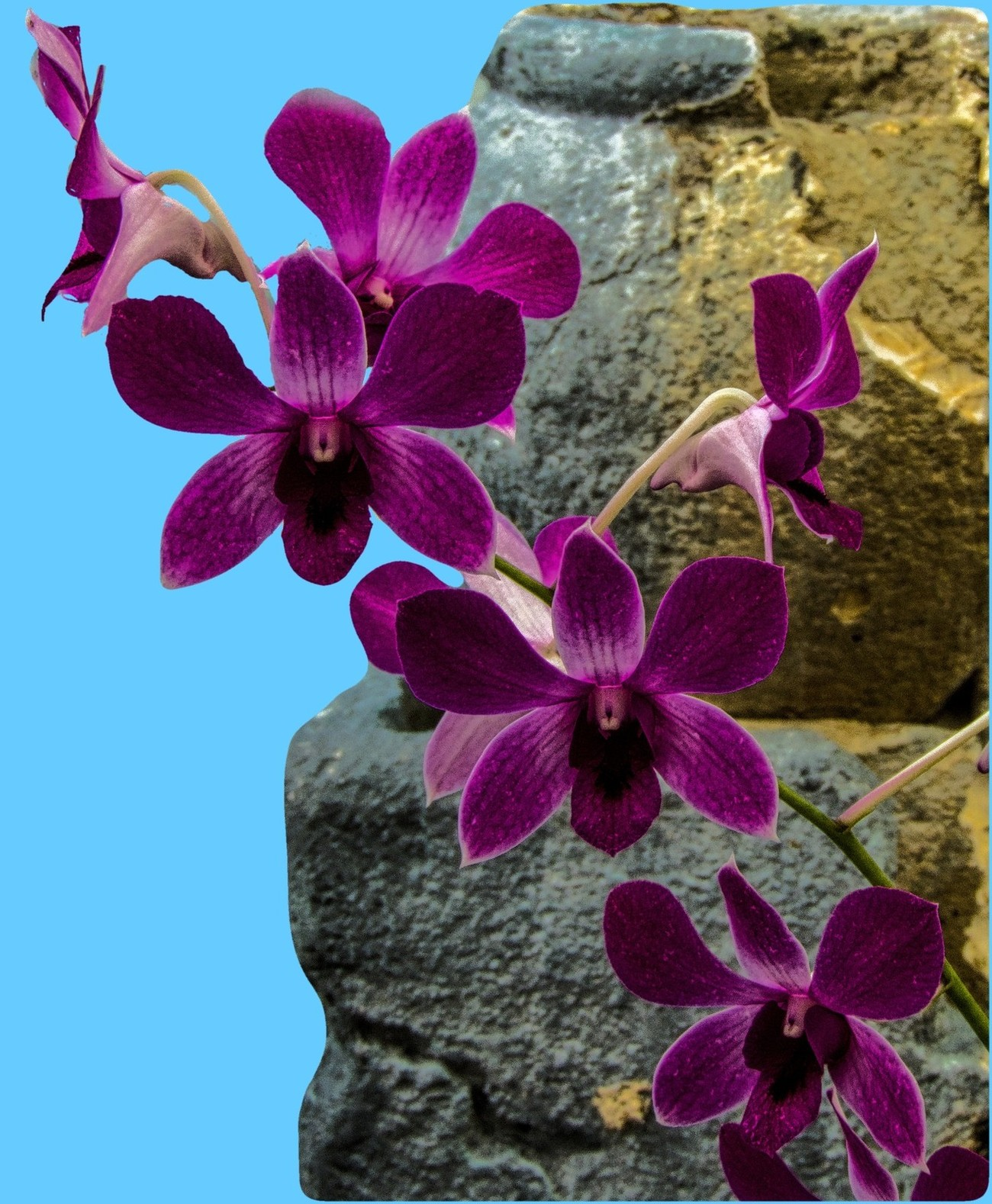 One of many beautiful orchids growing in the Buffalo Botanical Gardens.