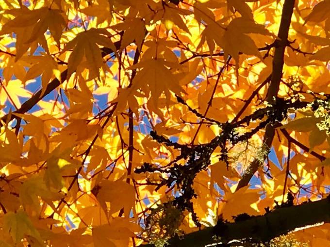 Underneath Autumn