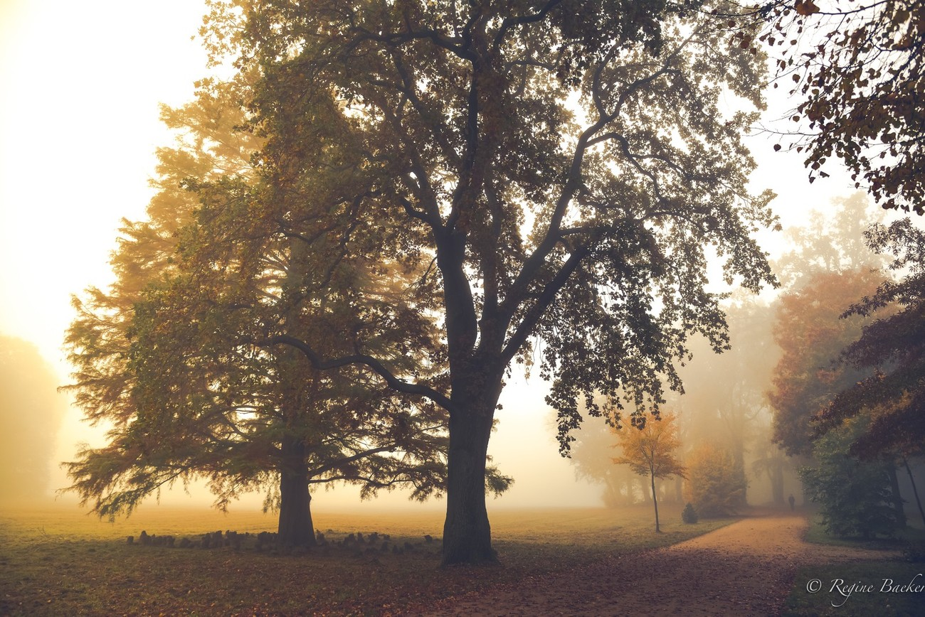 with the beginning of autumn the autumnal coloring begins - also foggy mornings we have lots of in Germany- good for mystic pictures