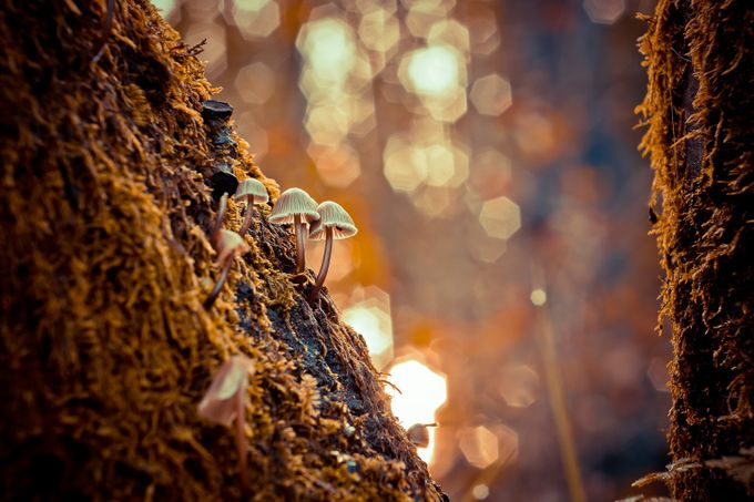 Morning light by AntonioBernardino - Everything Bokeh Photo Contest