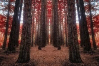 Warburton - Forest