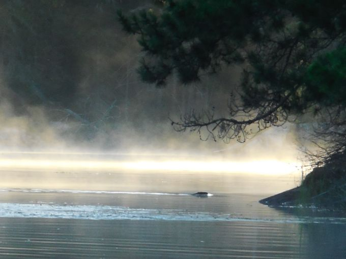 Beaver swimming, with the sun reflecting on the fog and water behind it Nikon Coolpix 6500