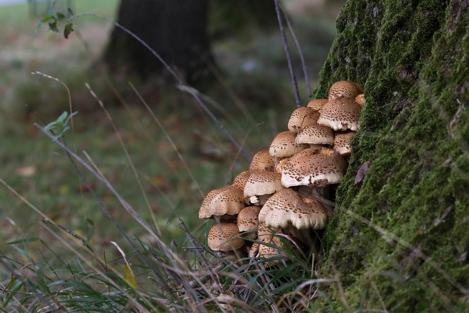 Mushrooms ..... Small