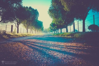 Early Morning Summer Road