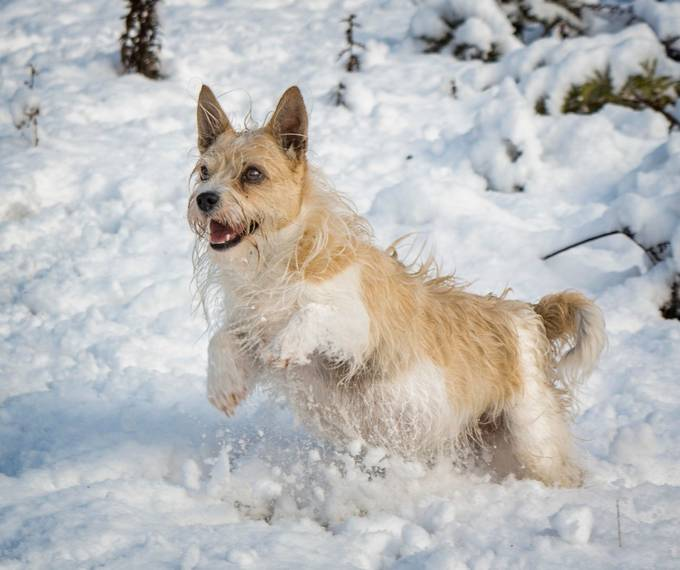 Pee Wee playing in snow.