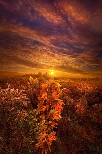In Perfect Solitude There Is Grace VOTO