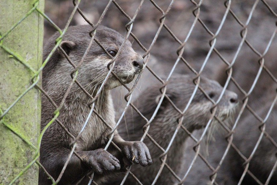 Otters at New Forest Wildlife Park.