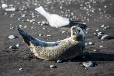 Seal antics