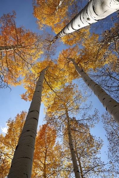 Terwijl ik door een espenbos in Colorado wandelde nadat de kleuren waren gepiekt, zag ik een uitbarsting van kleur op de volgende helling en spoorde het op. Deze paar tr door Theo-Herbots-Fotograaf