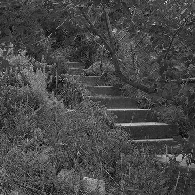 Forgotten Stair