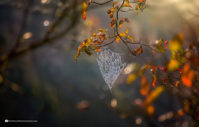 Autumn's Morning Light by Merma1d - Everything Bokeh Photo Contest