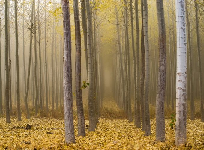Trees in the Fog  by Boldstep - Creative Landscapes Photo Contest