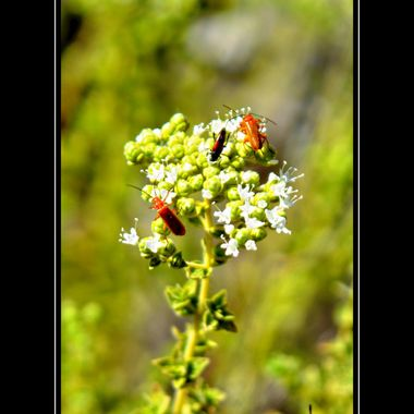 Bugs on a Flower.