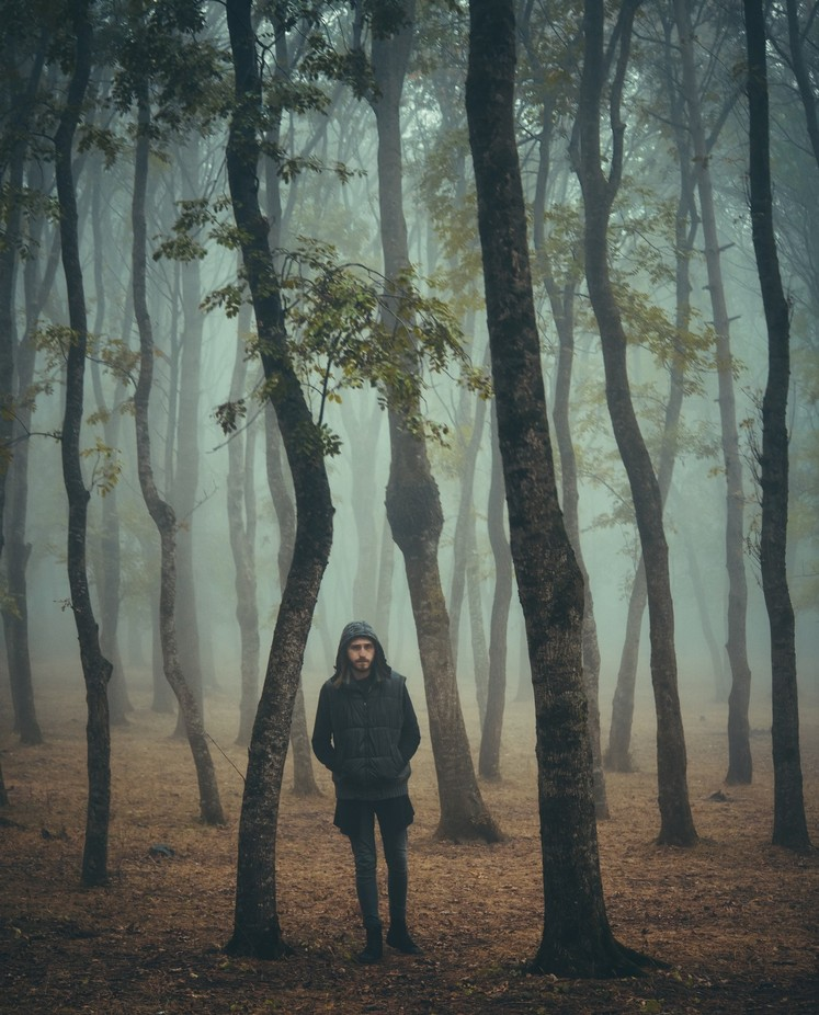 into the woods by da-miane - A Walk In The Mist Photo Contest