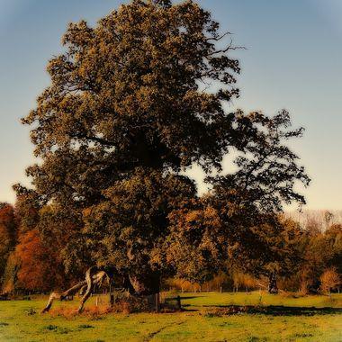 A lone tree in Sababurg park.