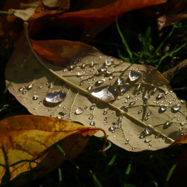 Fall Morning Dew