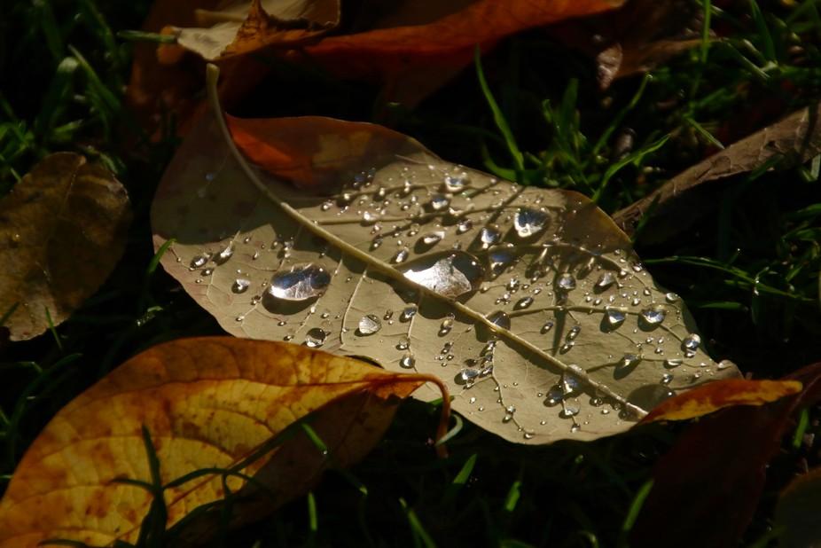 Fall Morning Dew