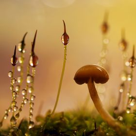Some simple forms of plants live for a short time but the little toadstool is here for only for a day or two.