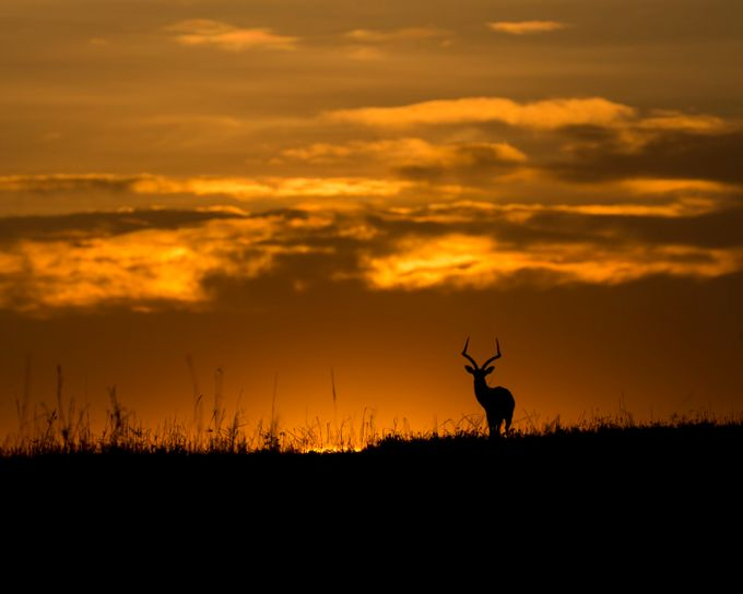 Morning Light in Masai Mara by lddove - Orange Is The Color Photo Contest