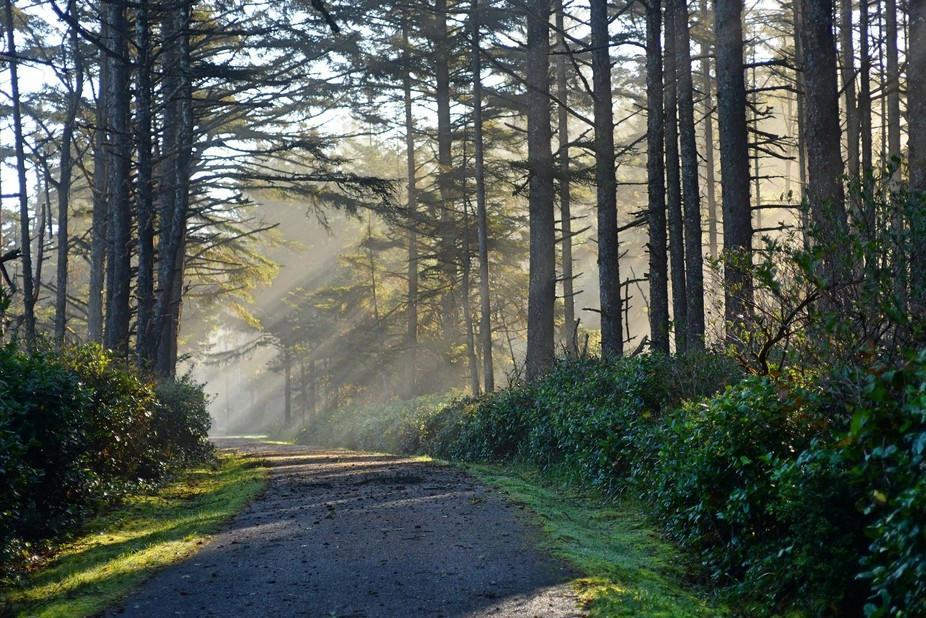 This road leads to the Arago Lighthouse on the Oregon coast. Road was closed hiked through thick ...