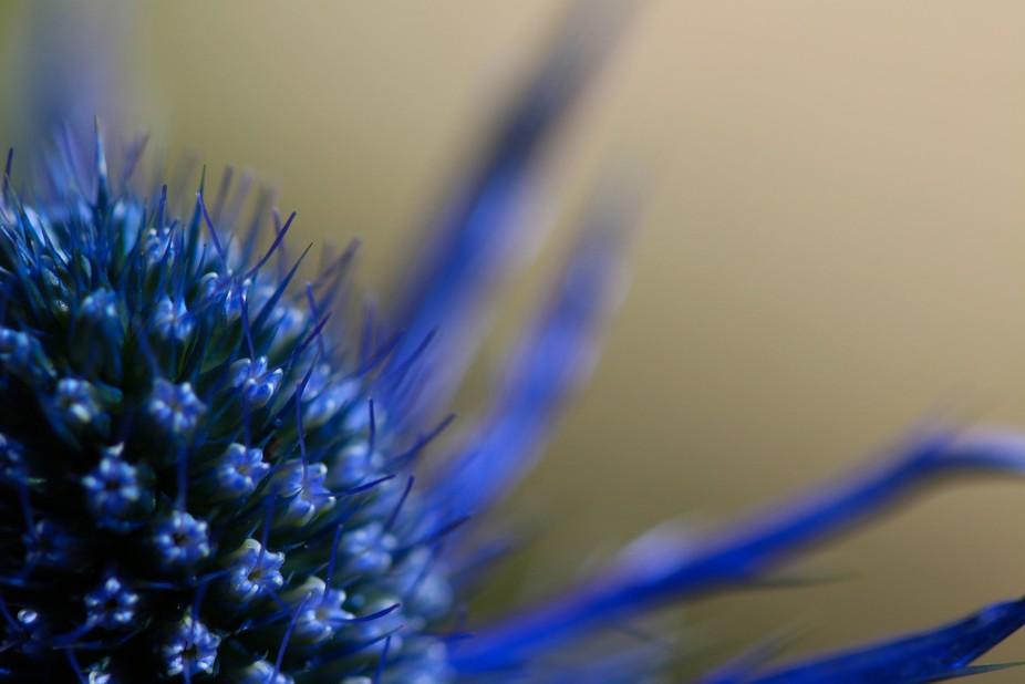 Grouse Mountain Flower